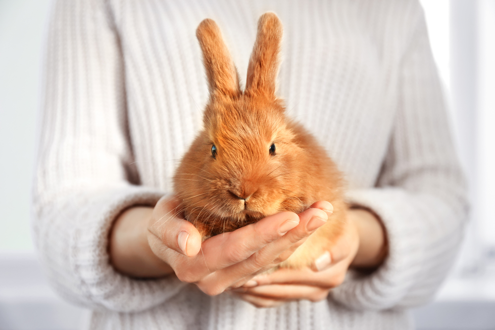Photo of ¡Libre de crueldad animal! Súmate a la tendencia Cruelty Free