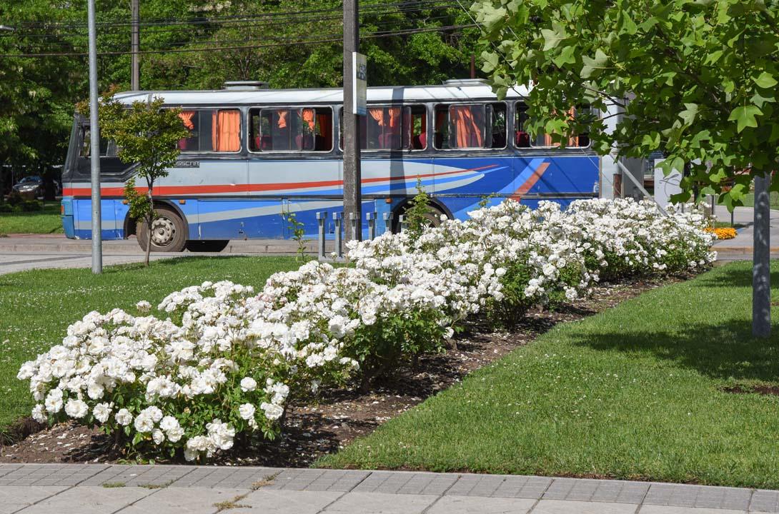 Los Ángeles recibe el verano con embellecimiento de sus parques y áreas verdes