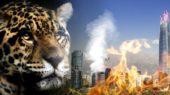 Los jaguares de Latinoamérica